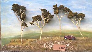 AUSTRALIAN MODEL GUM TREES  HO  OO  Lot 116