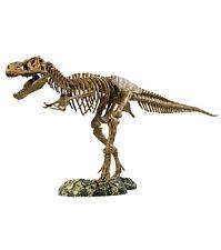 Scheletro Dinosauro - T Rex - EDU TOYS - 91 cm Tirannosauro - USATO COME NUOVO