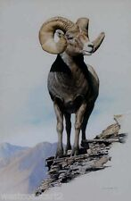 Ron Parker 1978 Painting Big Horn Sheep Canadian Listed Wildlife Artist Art