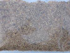 Réel Goji Baie LUTTE CONTRE LE VIEILLISSEMENT - 100 Graines, Wolfberry