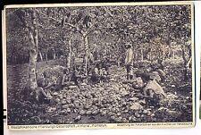"""K 148-Camerun 1. pflanzungs società """"Viktoria"""" - abbattimento del semi di cacao"""