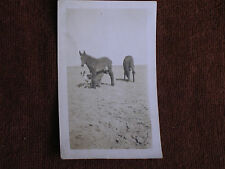 Farmer w Dog Peaks Out from Underneath Horse Near Hokah MN/1920s Snapshot Photo