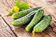 100 Graines de Cornichon Fin de Meaux Gherkin Fin de Meaux- Ridge Cucumber seeds
