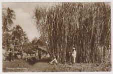 Java postcard - Rietoogst, Cane Crop