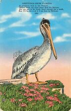 Linen FL Postcard E017 Greeting from Florida Pelican Cancel 1941 Kropp WWII