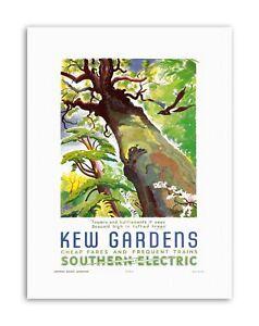 KEW GARDENS SOUTHERN ELECTRIC TREE BIRD Vintage Travel Canvas art Prints