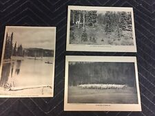 "Vintage ""Grand Mesa Resort"" COLORADO Nature Animal Theme Rare 1cent Postcard Set"