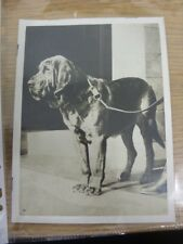 "circa 1920's Dog Show: Original Photograph, 8""x 6"" - President Of The 'Tail Wagg"