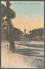 Beyrouth La Forêt des Pins Forest of Pines حرش بيروت 1907 PC by Amalberti UNUSED