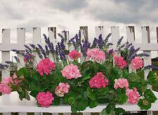 Outdoor Window Box Silk Pink Geraniums Lavender Arrangement Flower 3 ft. Garden