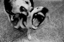 Neal White Photo, Dogs, 1970s