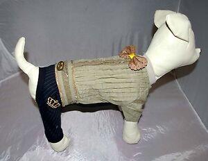 0000a_Angeldog_Hundekleidung_Hundeanzug_Smoking_Festlich_Chihuahua_RL 24_XS kurz