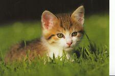 Animal Postcard - Kitten Laying Down in Grass - Ref AB3024