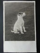 Dogs Theme FOX TERRIER PUPPY Wire Haired c1904 Postcard by C.W.Faulkner & Co