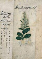 """Hellebori-Buttercups """"Un Japonais à base de plantes"""" 17th Century plant Anatomy Poster"""