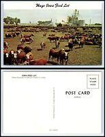 IOWA Postcard - Huge Feed Lot - Cattle Q26