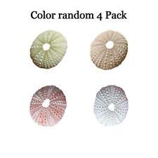 4 Pcs Natural Shells 4-6cm Sea Urchin Seashells Durable Decor Craft A6Q8