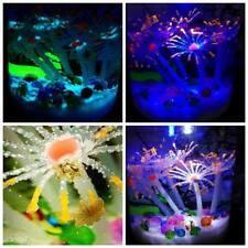 Self sustaining Eco system! Marine style tank! Live shrimp and plants! LED Gift