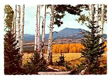 San Francisco Peaks Arizona Postcard Aspen Trees Quakies Golden Leaves
