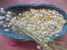 CAMOMILE Tisane THÉ Fleurs seché Bio, CHAMOMILE TEA Flowers 40gr Naturel
