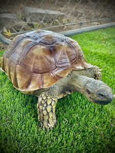 taxidermy mount big sulcata tortoise related snake lizard reptile turtle
