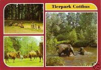 AK, Cottbus, Tierpark Cottbus, drei Abb., Version 2, 1986