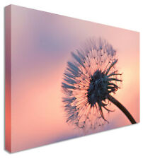 Dandelion Flower Canvas Wall Art Picture Print