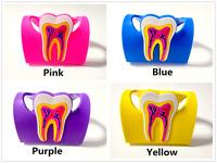 Rubber Teeth Business Name Card Holder 4 Colors Case For Dentist Dental Gift
