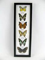 6 papillons - taxidermie, cadre, exotiques - une beauté unique Naturalise   h17