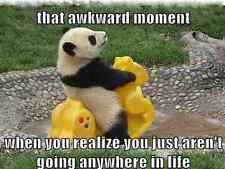 "Funny Panda  refrigerator magnet 2 1/2x 3 1/2"""