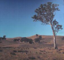 """12X12"""" Scrapbook Paper Eucalypt Gum Tree Landscape"""