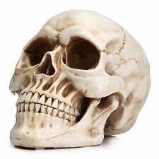 Human Skull Replica Realistic Bone Model White Detailed Resin Full Size 1:1 New