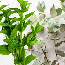 Spearmint Eucalyptus Fragrance Oil Candle/Soap Making Supplies **Free S & H **