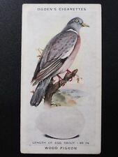 No.28 WOOD PIGEON  - British Birds & Their Eggs by Ogdens Ltd 1939