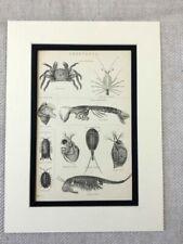 Paper Medium (up to 36in.) Animals Art Prints