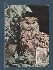 carte  1er jour  oiseau hibou grand duc nature 75 Paris  1972