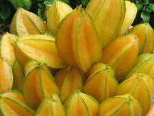 20 SEED Averrhoa carambola Star Fruit From Thailand