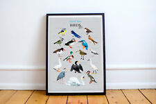 BRITISH WATER BIRDS BEAUTIFUL ILLUSTRATED WALL ART WILDLIFE PICTURE POSTER DUCK