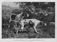 DOGS HUNTING PARTRIDGE POINTER AT CLOSE QUARTERS WITH PARTRIDGE HUNTING BIRD DOG