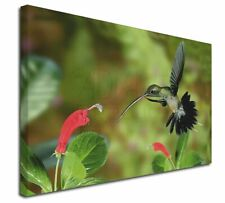 More details for green hermit humming bird x-large 30