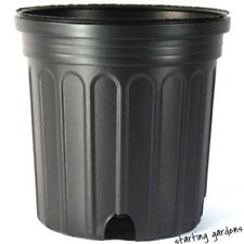 1 Gallon Nursery Pot (Qty.50), Black Trade Gallon, 6.5 Inch