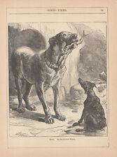 Mastiff Dog Eating Fish Antique Print 1885