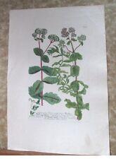 "Vintage Engraving,TELEPHIUM,C.1740,WEINMANN,Botanical,20x13.5"",Mezzotint"