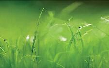 Fresh Green Grass closeup Photographic Wall Paper Mural Interior Decor Komar