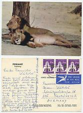 21120-LEONE-Kalahari gemsbok National Park-cartolina andato, 1966