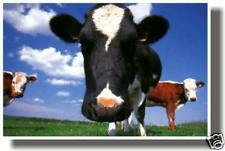 Moooo Cow Bovine Funny Animal Farm Print New Poster