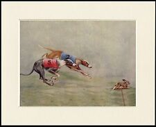 GREYHOUND DOGS RACING LOVELY DOG PRINT MOUNTED READY TO FRAME