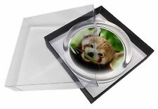 Cute Red Panda Glass Paperweight in Gift Box Christmas Present, ARP-2PW