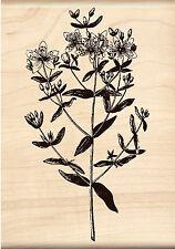 Flower Blossoms Stem Wood Mounted Rubber Stamp Brenda Walton by Inkadinkado NEW