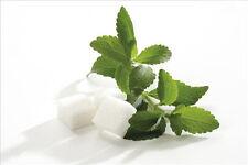 Stevia rebaudiana vanilla Sweet Make Tea for home garden 50 seeds horticulture